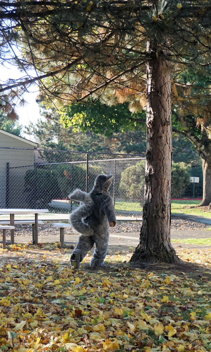 My son running in his squirrel costume around a tree.
