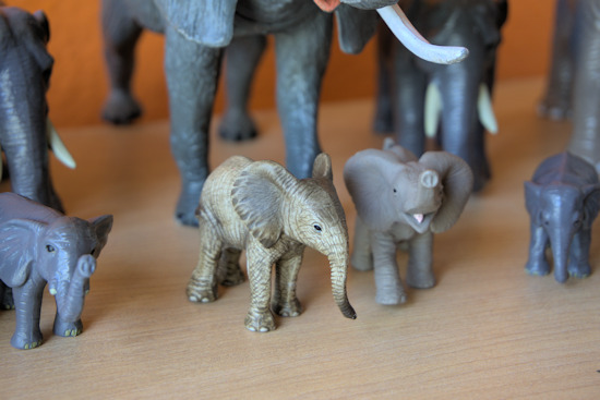 Toy elephants lined up on a shelf